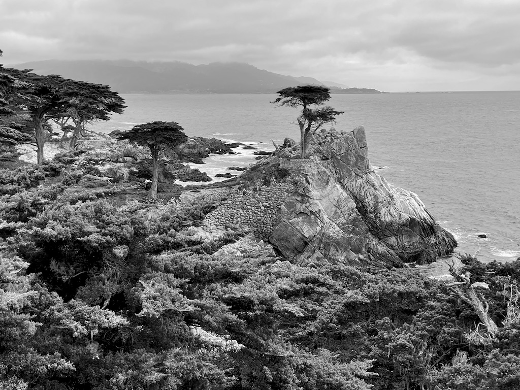 The famed lone cypress tree.
