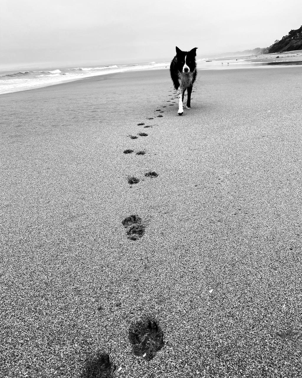 At the beach inside Pebble Beach.