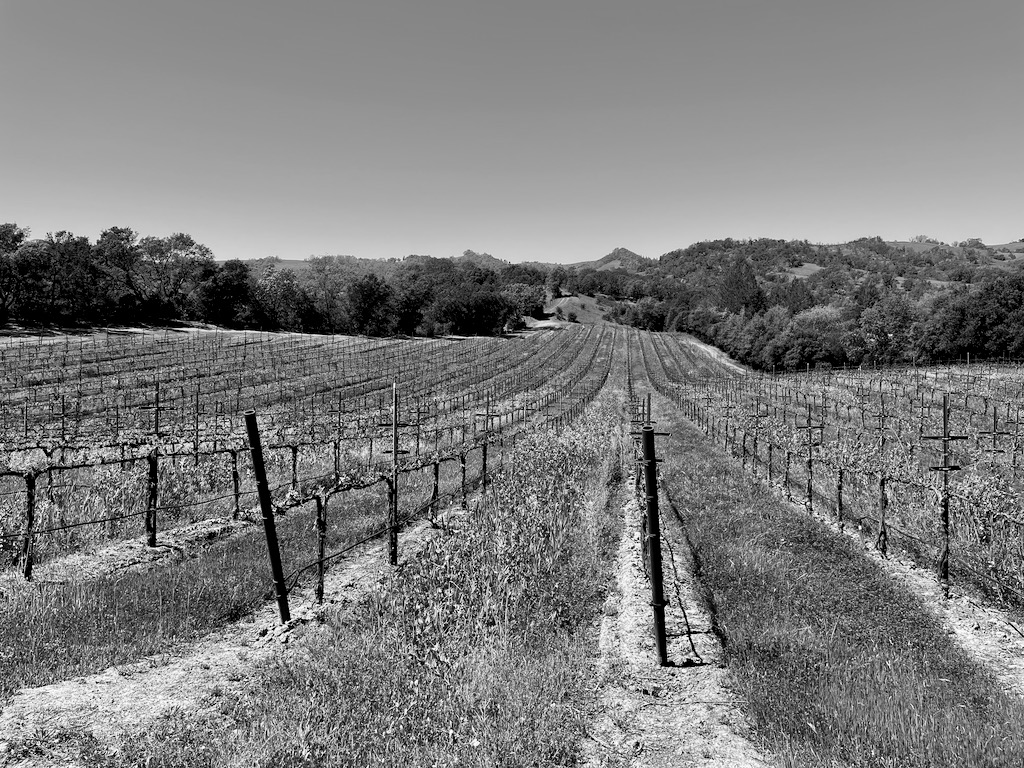 The vineyard we toured where Sutro gets their grapes.