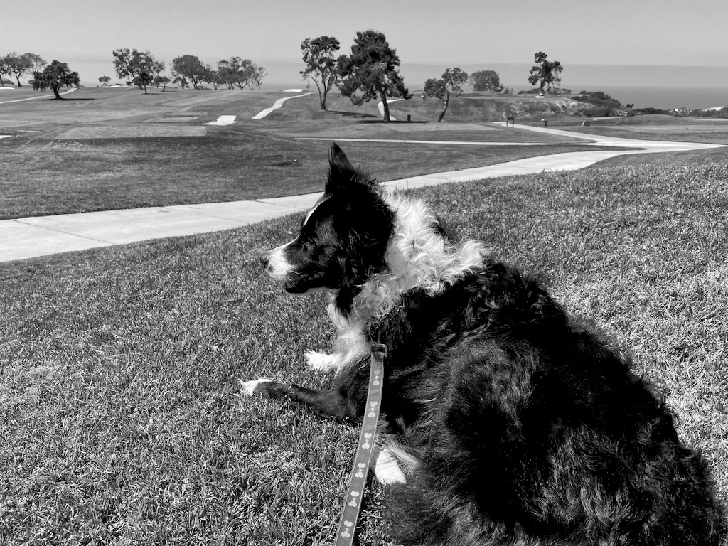 Skutull waiting for me to finish golfing.