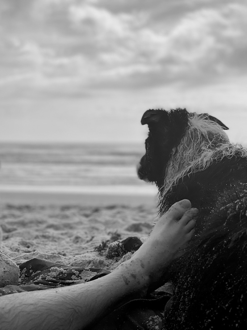 We of course enjoyed some beach time. The waves here were much more friendly than in Oregon, so Skutull got to swim!