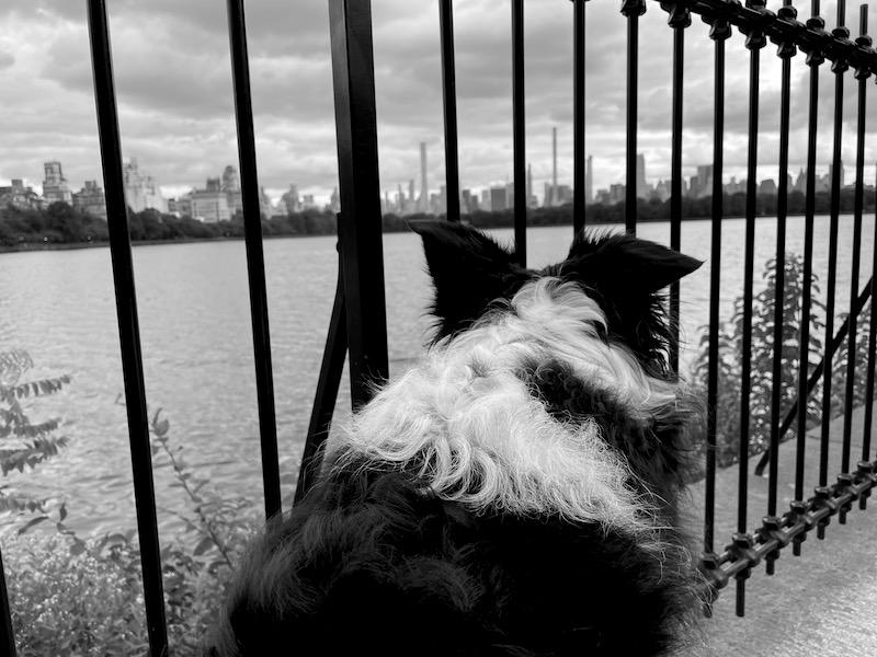 2 our first walk through Central Park
