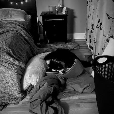 Sktull napping.